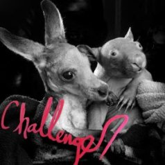 Challenger- I Am Switches - The World Is Too Much For Me  bandcamp